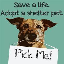 shelter dog