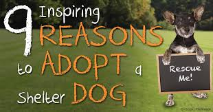 reasons to adopt